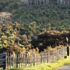 Totara Glades surveying and ecology