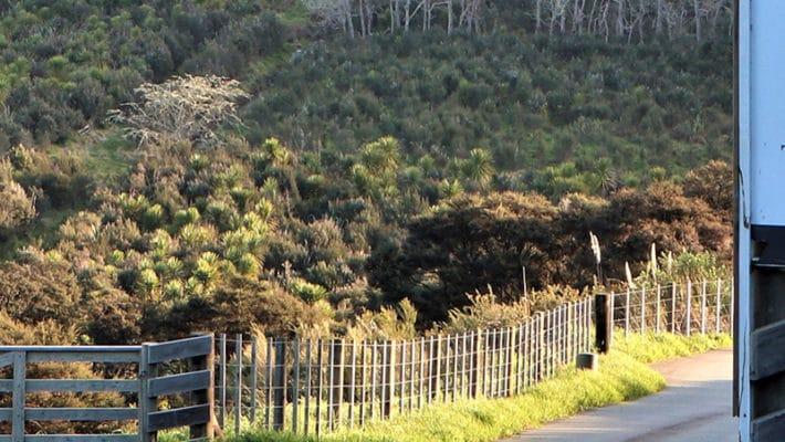 totara glades banner 710x400 - Surveying