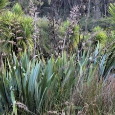 Auckland Rural Wetland 235x235 - Environment Court Decision on Auckland's Rural Subdivision Rules