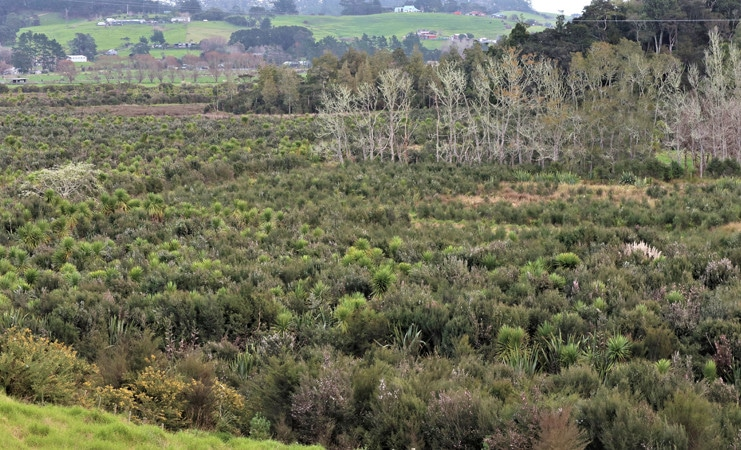 Native Wetland protected for the on site subdivision or to generate transferable title rights - Auckland's Rural Subdivision Rules Now Operative